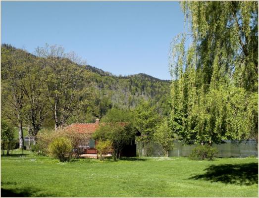 Ferienwohnung am Schliersee mit Bergblick Bäume