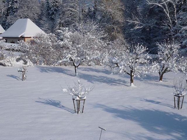 BlickinObstgarten-und-Muehle-Winter