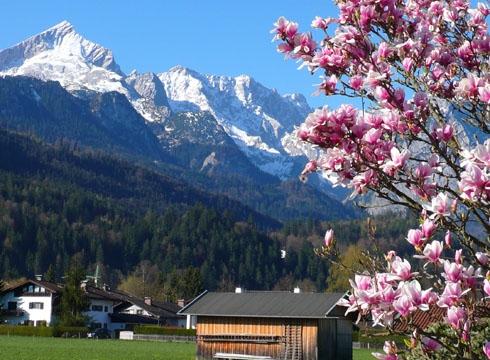 AlpsMagnolie.490x360