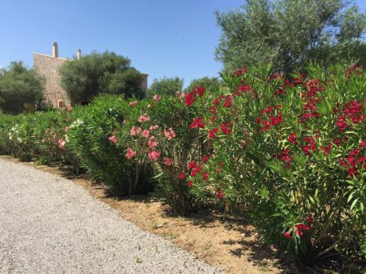 Romantische Naturstein Finca auf Mallorca Blumenbeet