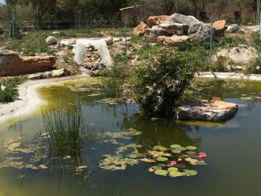 Romantische Naturstein Finca auf Mallorca Teichblick mit Strauch