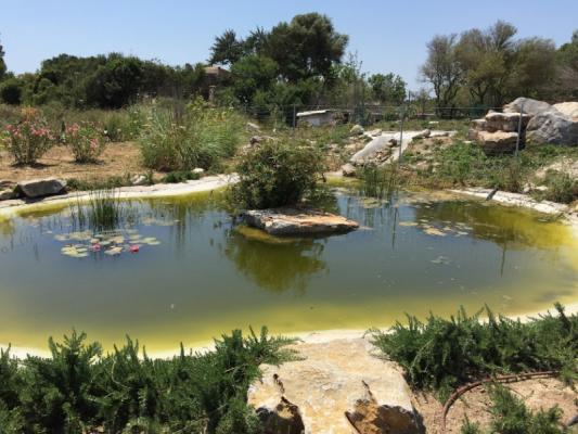 Romantische Naturstein Finca auf Mallorca Teichblick