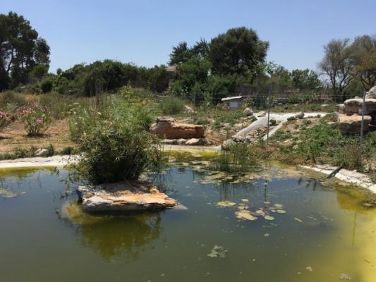 Romantische Naturstein Finca auf Mallorca Teichblick groß