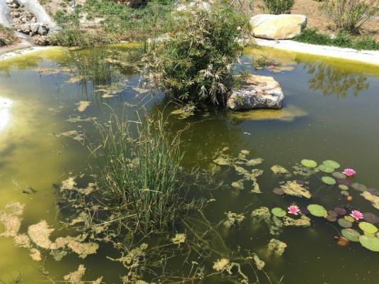 Romantische Naturstein Finca auf Mallorca Teich mit Seerosen