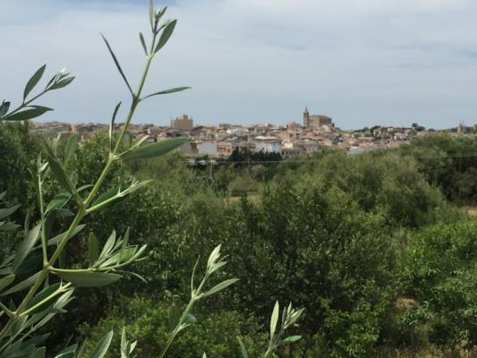 Romantische Naturstein Finca auf Mallorca Umgebung