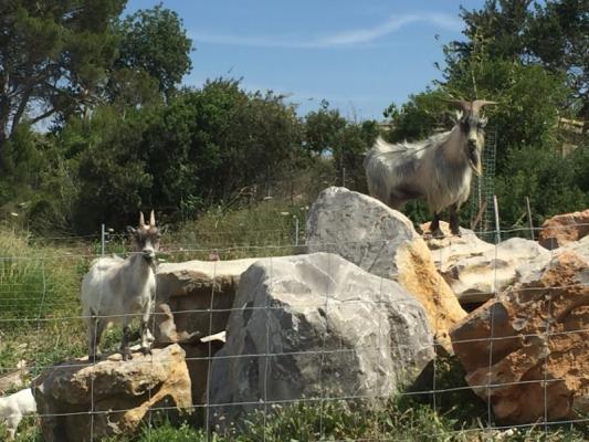 Romantische Naturstein Finca auf Mallorca Natur