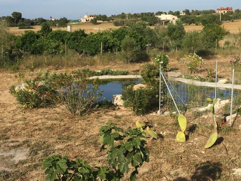 Romantische Naturstein Finca auf Mallorca Teich
