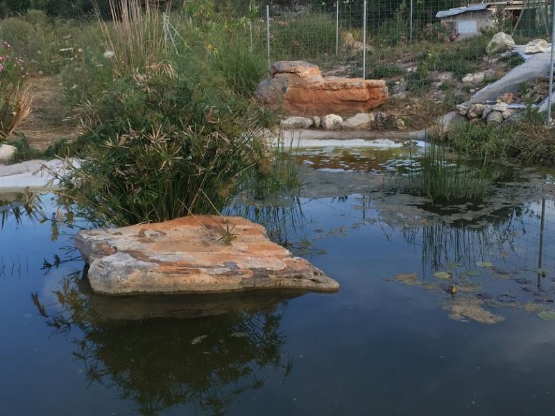 Romantische Naturstein Finca auf Mallorca Poolblick