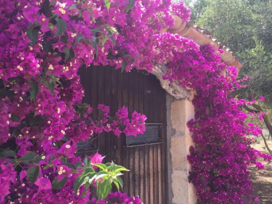 Romantische Naturstein Finca auf Mallorca Bougainville nah