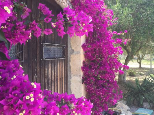 Romantische Naturstein Finca auf Mallorca Bougainville mit Baum
