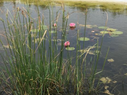 Romantische Naturstein Finca auf Mallorca Seerosen im Teich