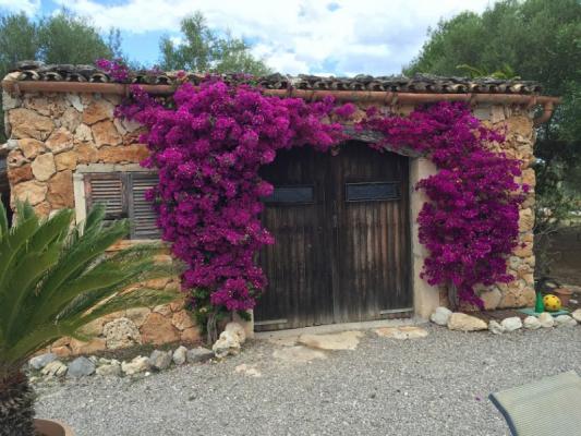 Romantische Naturstein Finca auf Mallorca Bougainville Rundbogen
