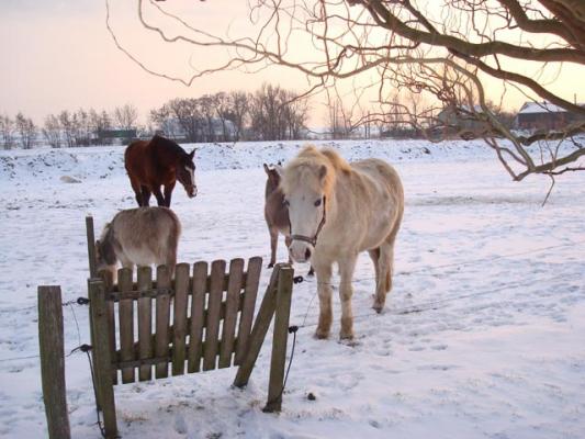 familienurlaub-bauernhof-Pony