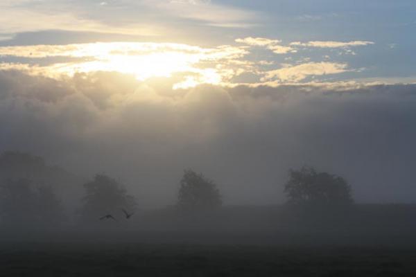 familienurlaub-bauernhof-Nebel