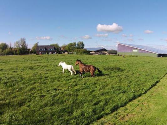 familienurlaub-bauernhof-Ponys