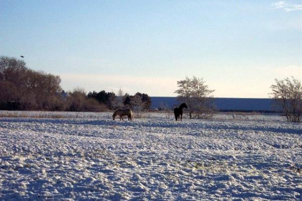 familienurlaub-bauernhof-Winter