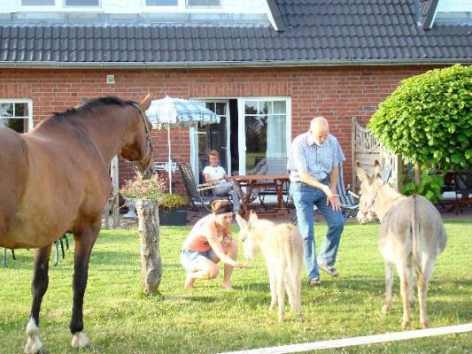 familienurlaub-bauernhof-Pferde